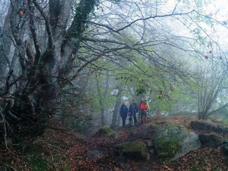 Al hayedo de Carlac se le denomina también por el bosque encantado. La imagen otoñal de Jesús García (Garcaba) da buena fe de ello