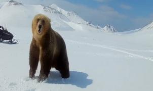 ¡Si persigues a un oso pardo en moto de nieve puede ser que acabe por atacarte!