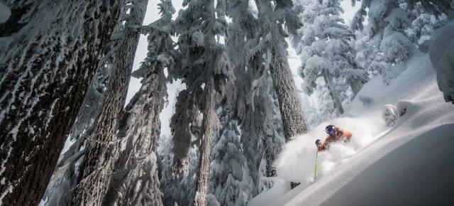 Whistler esquiando entre pinos