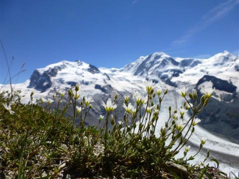 Monte Rosa  Zermatt Gornergrat