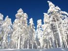 Bosques nevados en Levi Laponia.