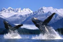 Descubre la Alaska salvaje: paisajes impresionantes entre orcas y grizzlies