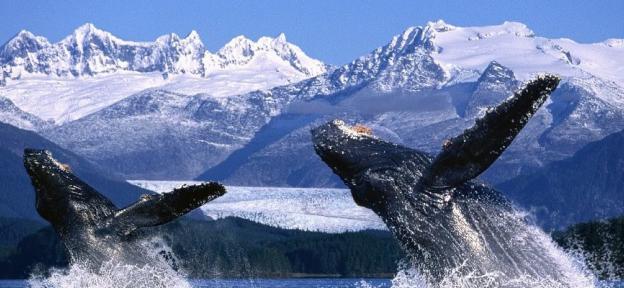 Descubre Alaska, un destino soñado con paisajes salvajes únicos