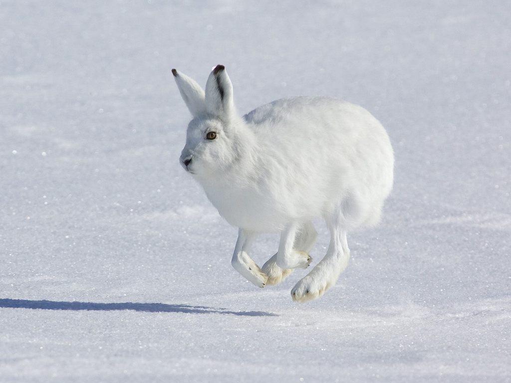 Фото кролика и зайца