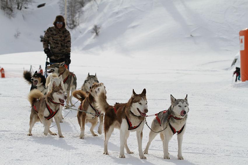Cerler-aramon-Trineo-perros-mushing