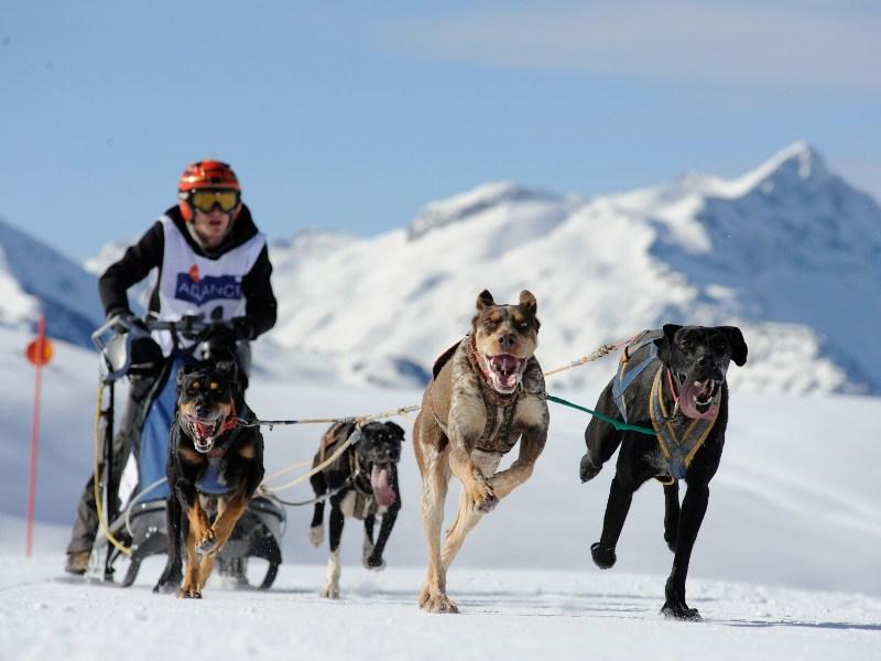 Mushing en Beret. (Campeonato de España de trineos con perros)