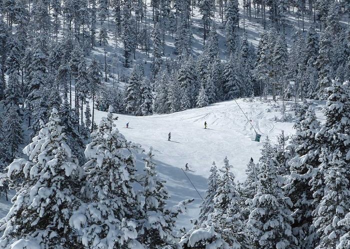 Los bosques de pinos de la Cerdaña son el lugar ideal para disfrutar del esquí