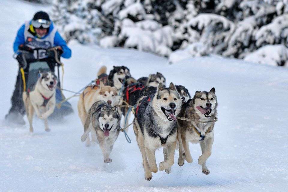 lazaro-martinez-mushing-team