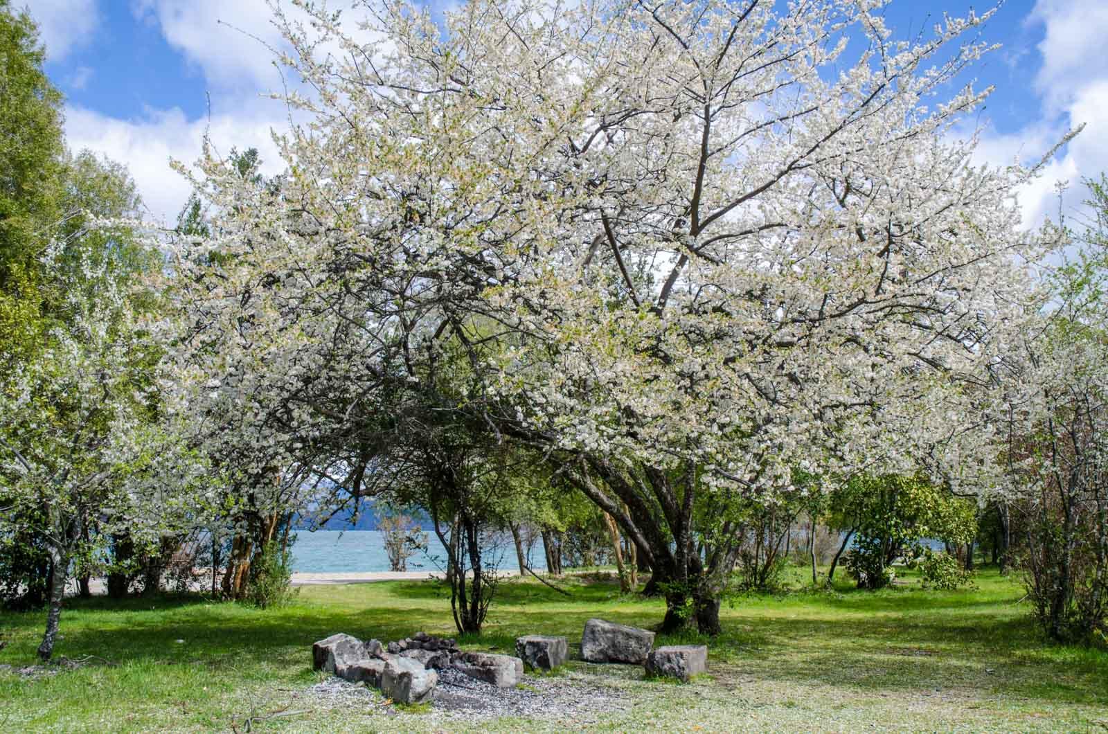 primavera en Puelo