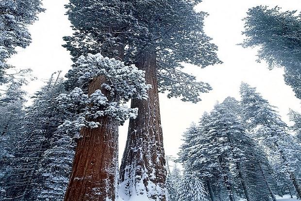 Parque Nacional de las Sequoias (California, USA). Foto: Jim Zuckerman