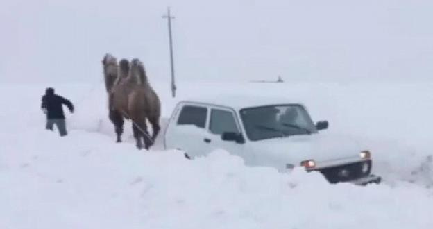 ¿Atrapado en la nieve con el coche y que te saque un camello? ¡Venga ya!