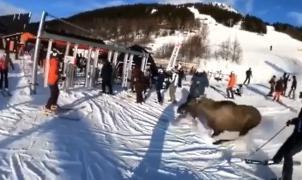 Un vídeo muestra un alce que esquiva por los pelos a varios esquiadores en Suecia