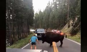 """Un sujeto quiere """"torear"""" a un enorme bisonte en Yellowstone y acaba arrestado"""