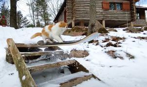 Vídeo: Taddy el gato con flow que alucina en las redes sociales