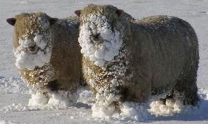 Helly Hansen confía en la lana merina