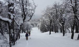 Talan 1.200 árboles protegidos para ampliar una pista de esquí de una estación privada del Chubut