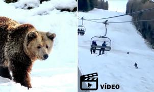 Vídeo: Un esquiador es perseguido por un oso mientras baja una pista en Rumania