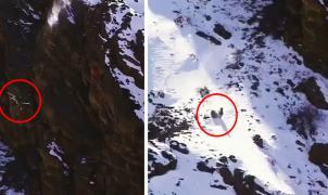 Un leopardo de las nieves sobrevive a una caída de 120 metros cuando estaba cazando