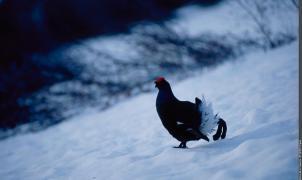El Parque Nacional de Vanoise lanza un proyecto de protección de aves en las zonas de esquí