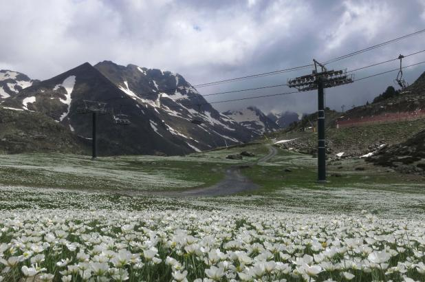 Vallnord/Ordino Arcalís, la nieve deja ver sus flores...