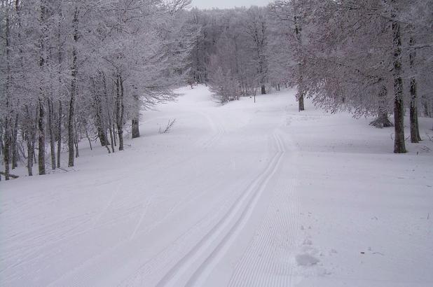 Esquí de fondo entre bosques