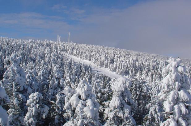 Aspecto de los bosques nevados en Valdelinares,Teruel