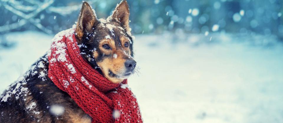 Primer pronóstico de invierno 2020-2021: La NOAA da un 75% de probabilidades de La Niña