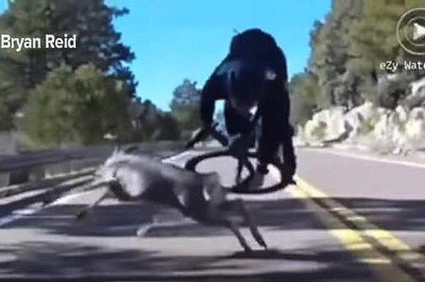 Impactante vídeo de un choque entre un ciclista en pleno descenso y un ciervo
