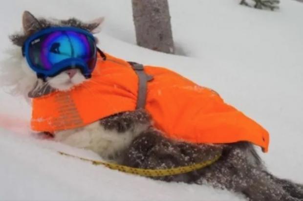 Gary, el gato esquiador que triunfa en Instagram