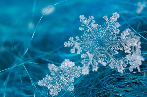 La nieve: el manto níveo