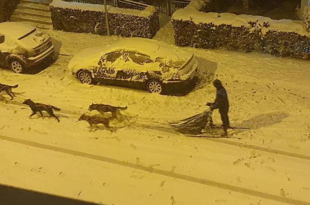 Sorprendente paseo de un musher con su trineo y sus perros por las calles nevadas de Madrid