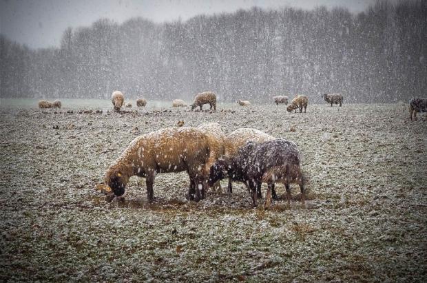 20 señales para que puedas predecir la nieve en invierno sin depender de la tecnología
