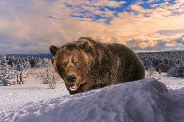 Vídeo: El año de los osos pardos que persiguen esquiadores...