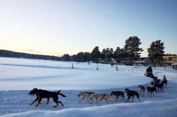 Mientras los trineos con perros se quedan sin clientes, aumenta el esquí en las estaciones de Finlandia
