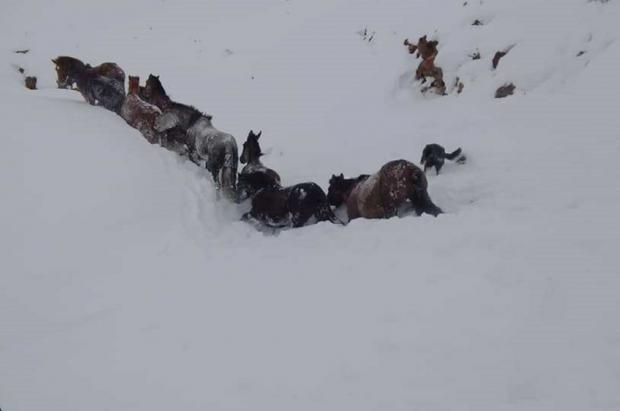 El vídeo del rescate de un grupo de caballos en la tormenta de nieve del Neuquén argentino