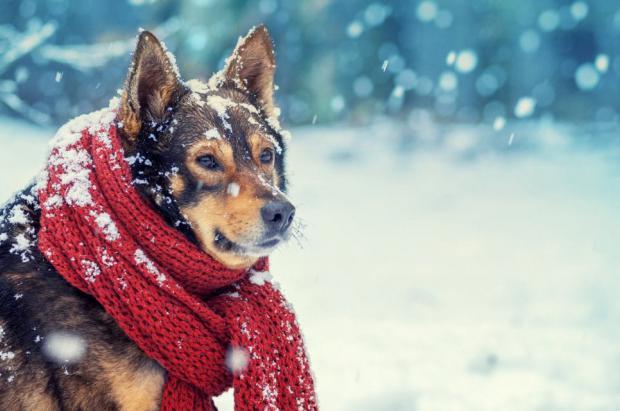 Primer pronóstico de invierno 2020-2021 NOAA: 75% de probabilidades de La Niña