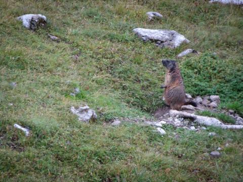 Curiosas marmotas te amenizarán la travesía