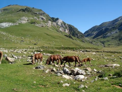 Valle del Freser