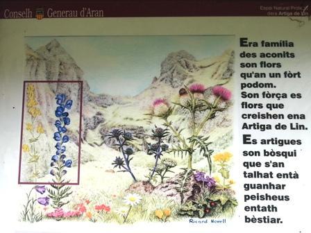 cartel promocional de Ricard Novell de la flora de l'Artiga de Lin