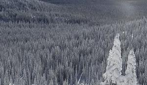 Ski en nieve polvo en Panorama (Canadá)