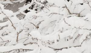 Semana de Esquí en Jasper Lobstick Lodge, Alberta-Canadá