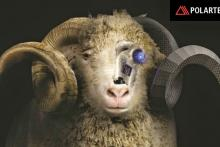 Polartec Power Wool, pura lana merina