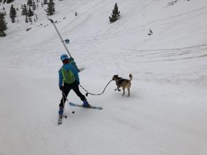 Llega el Skimo con perro en pistas ¿Se puede? ¿Se debe? ¿En una estación abierta?